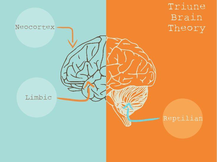 Triune Brain Theory: Your triune is primitive, don't let ...