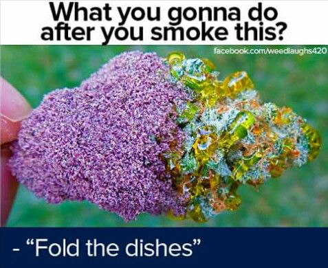 Haha reminds me of stuff my mom would say! Put the clothes in the oven, or the dishes in the dryer