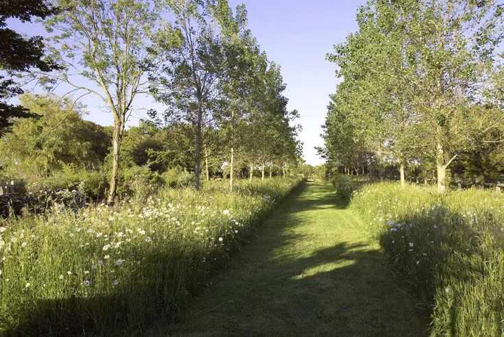 An avenue of trees with a wild flower meadow beneath