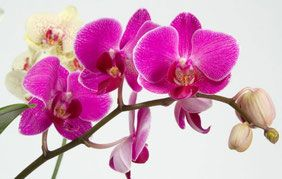 Уход за орхидеями - https://www.dejavu-flowers.ru/news-floristiki/