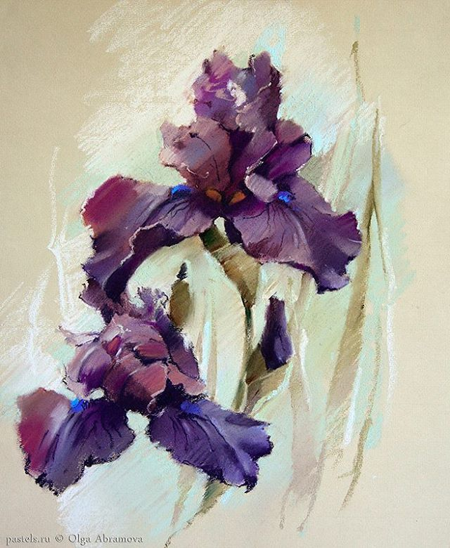 "1,238 Likes, 11 Comments - Olga Abramova (@olga_abramova_art) on Instagram: ""Ирис, 65х55 Бумага, пастель  Iris Pastel on paper  С Рождеством! Картина в мастерской и ее можно…"""