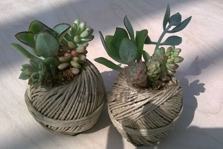 gomitoli di spago con succulente