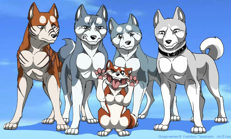 What a family hahaha  Shiro>Riki>Gin>Weed>Orion(the pup)