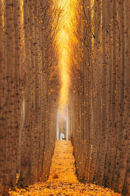 Boardman Tree Farm by Jordan Lacsina