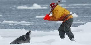 Petition · Catherine Mckenna : Ban Harp Seal Hunting in Canada · Change.org