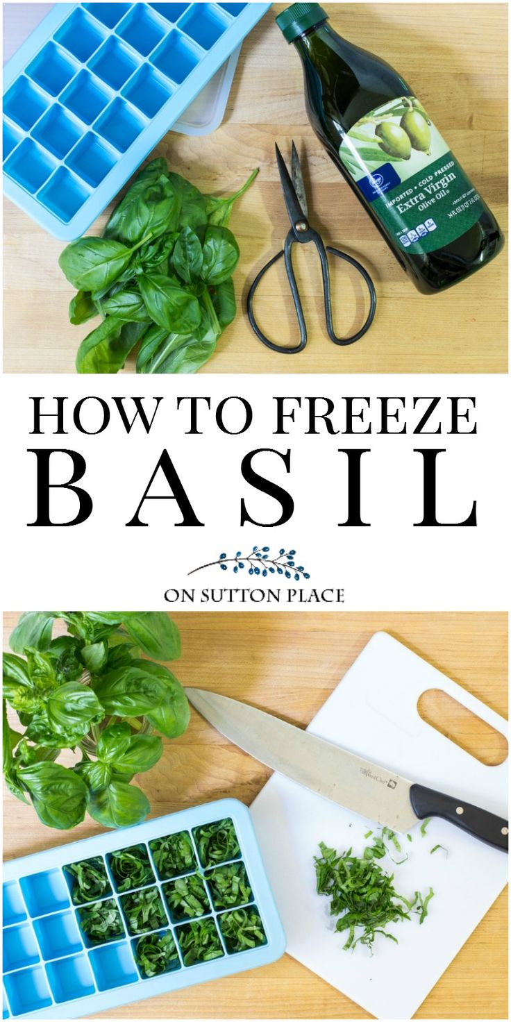All About Basil | The Complete Guide | How to grow basil, how to propagate basil, how to chop basil, how to freeze basil. Easy tips to get the most out of your basil plants.
