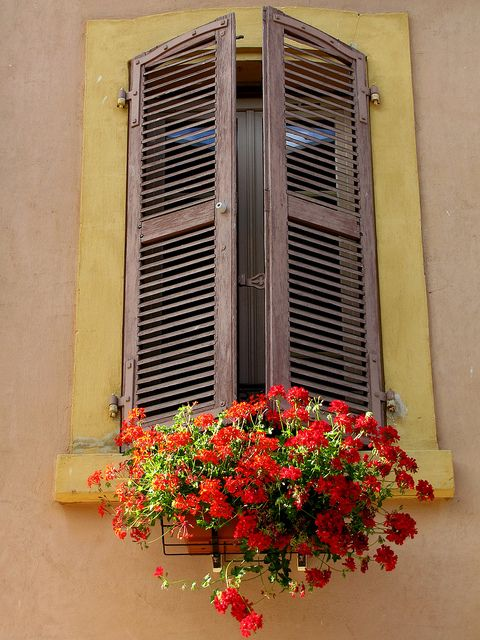 window and flower beauty