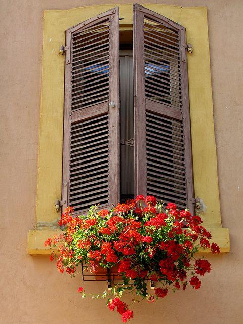 window and flower beauty