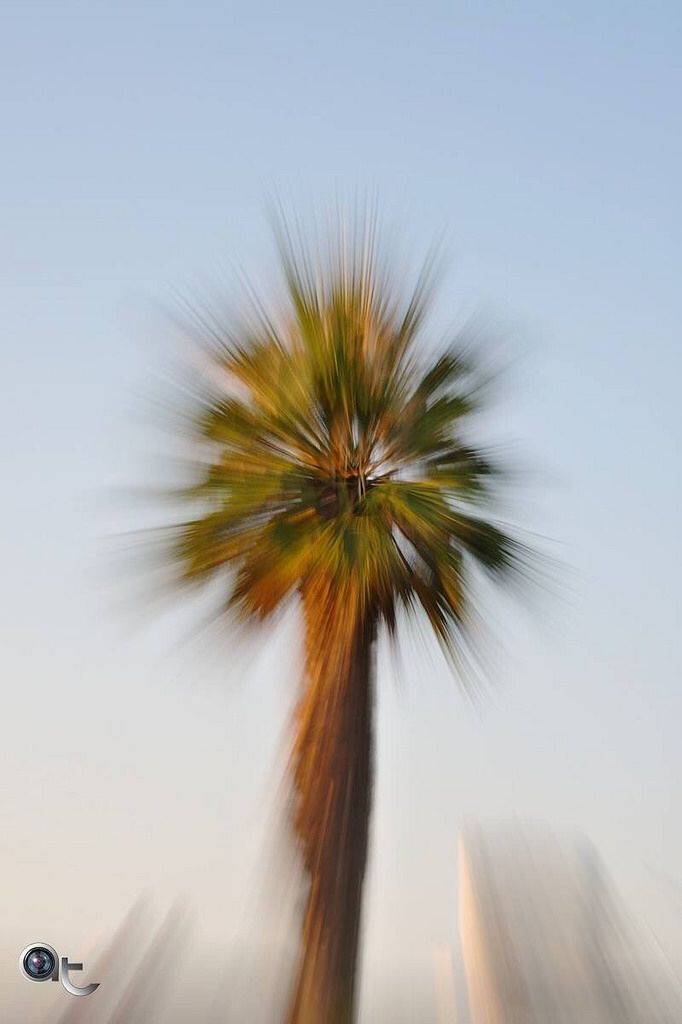 The #palm #tree - #andreaturno #nikontop #nikonphoto_ #life_in_colors #green #brown #blue #photo_impressionism #art #abstract