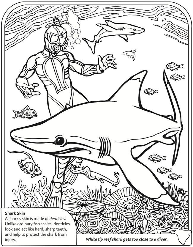 Poisson requin coloriages pinterest poisson requin - Modele dessin requin ...