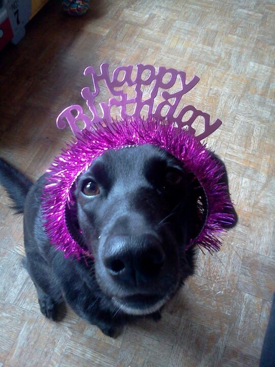 Happy Birthday Happy birthday labrador, Happy birthday