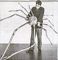 Deep-sea gigantism - Wikipedia, the free encyclopedia