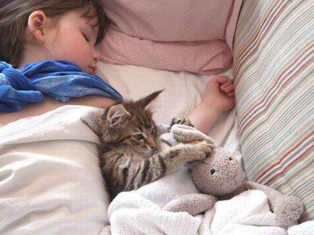 A frequência do ronronar dos gatos está entre 25 e 50 hertz, ou seja, a mesma utilizada na medicina esportiva para cicatrização e recuperação de lesões. Recentemente a Apple colocou o mercado um aplicativo novo, no qual o ronronar do gato é utilizado através do iPhone para minimizar o estresse que a diferença de fuso horário causa em viagens longas.   Além disso, esse barulhinho pode ajudar a dormir, pois altera o estado de alerta das ondas cerebrais. Que delícia!