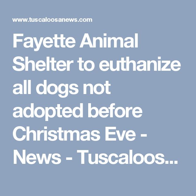 Fayette Animal Shelter to euthanize all dogs not adopted before Christmas Eve - News - Tuscaloosa News - Tuscaloosa, AL