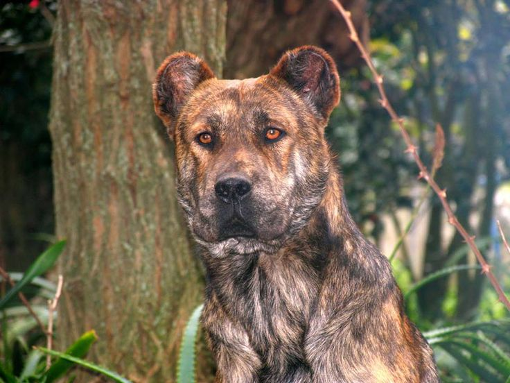 Best Looking Mixed Breed Dogs