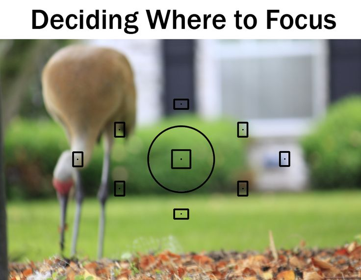 Deciding Where To Focus   Boost Your Photography