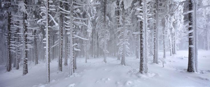 Everlasting Winter by Kilian Schönberger on 500px  At the border between Czech Sumava National Park und Bavarian Border National Park