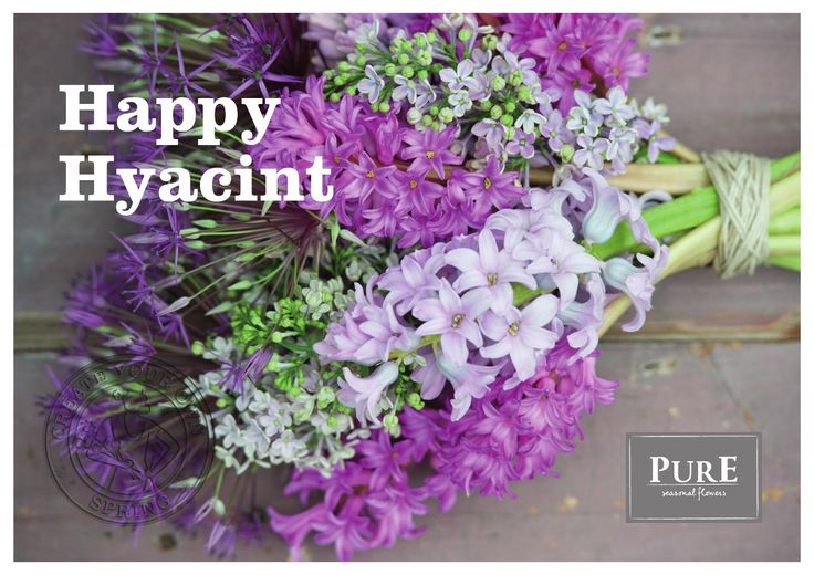 Happy Hyacint - poster A3.  Opdrachtgever: PurE seasonal flowers