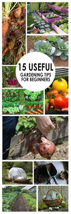 Superior 15 Useful Gardening Tips For Beginners
