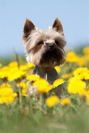 Springtime safety tips for dog owners