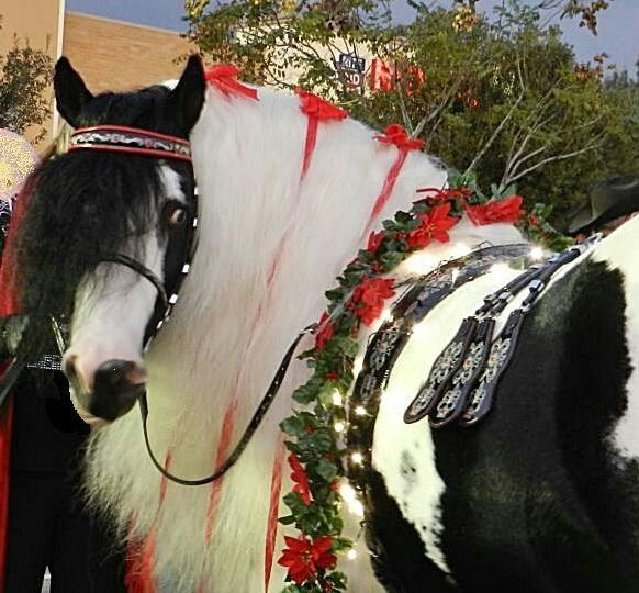 118 best Everything City of Norco, CA images on Pinterest | Horse ...
