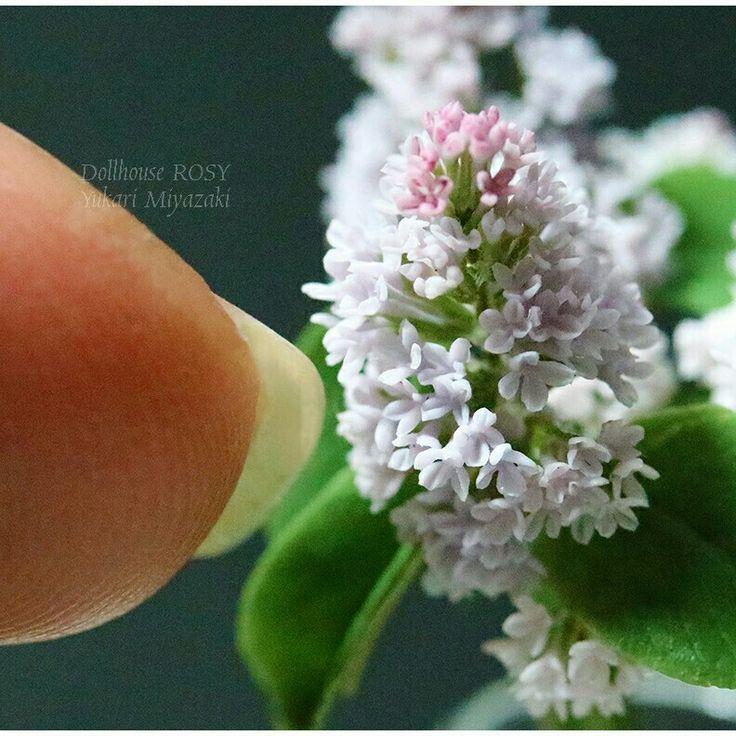 Small Japanese Garden Minis