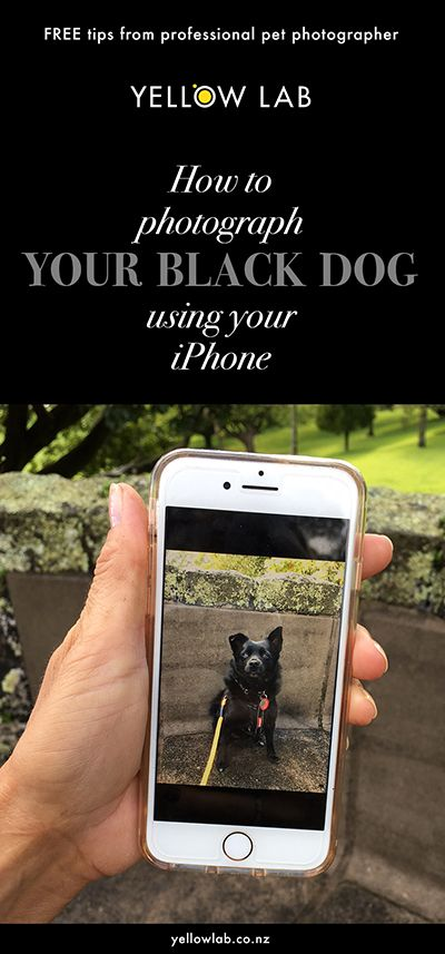 tutorial, how to photograph my black dog, iPhone photo tips from photographer