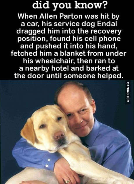 Truly, a man's best friend | Assistance / Service dogs