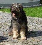 Katalanischer Hirtenhund-Hundezüchter (2. Ergebnis)