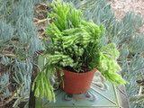 Premium quality succulent and cactus plants, gifts, dish gardens, wedding favors, desert gardens,