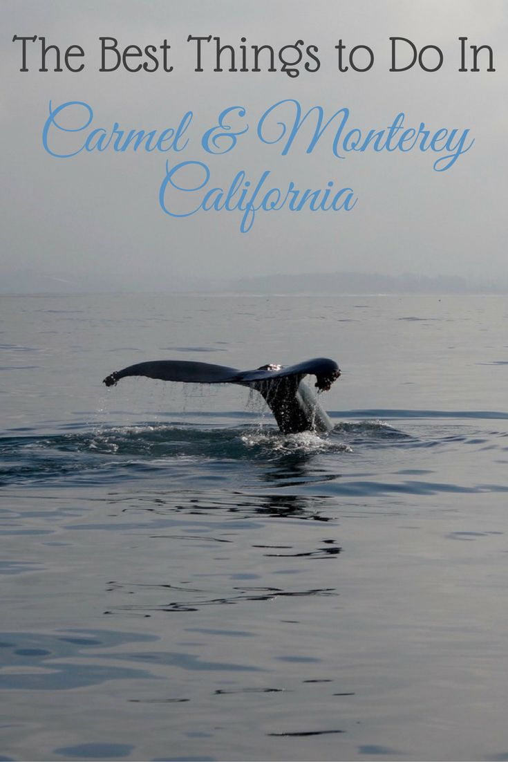 Find the best things to do in Carmel & Monterey, California. Avoid the tourist traps and find everything including hotels, restaurants and activities.