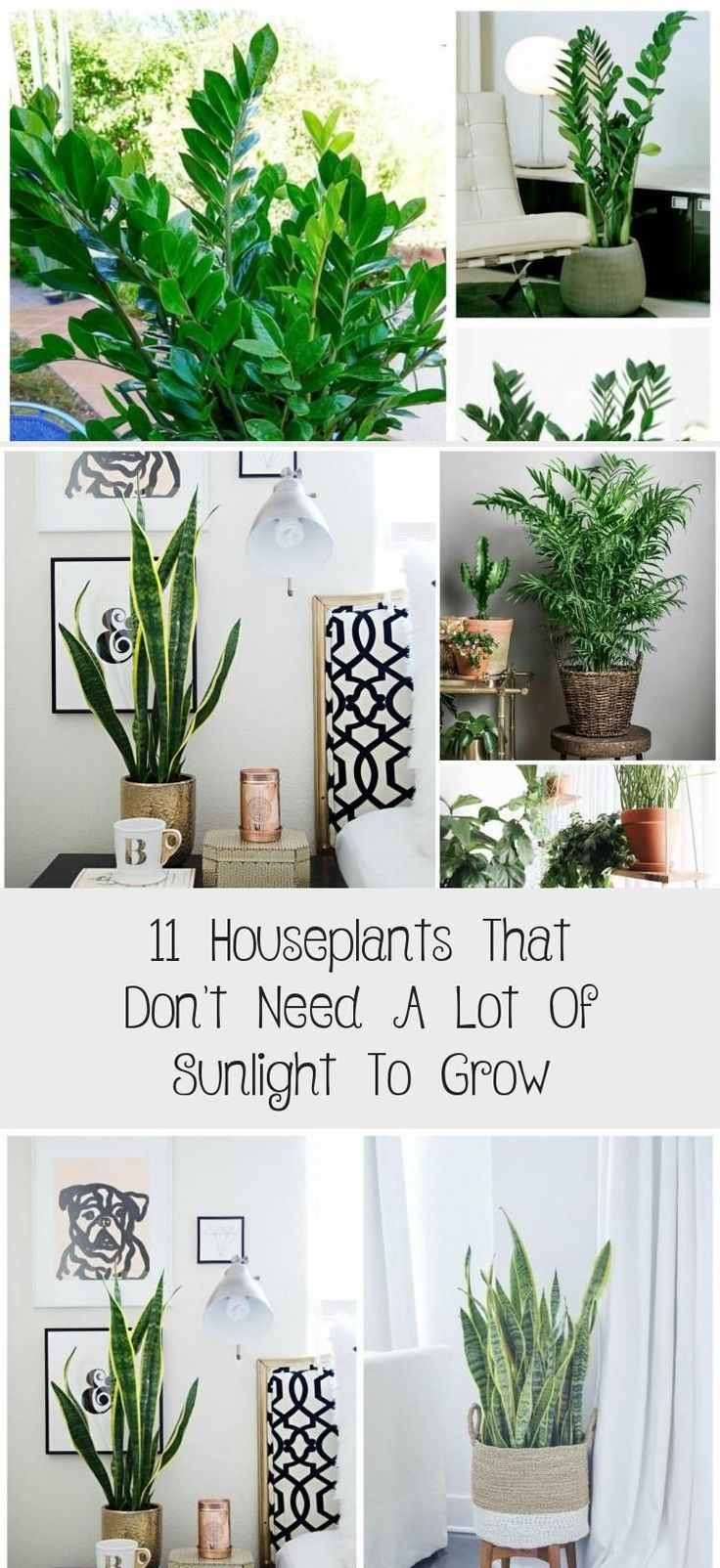 Super Plants That Dont Need Sunlight Green Ideas Plants In 2020 Plants Easy Plants To Grow Easy Plants