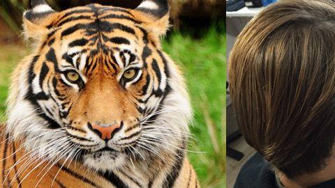 Charlando entre cambios de vestuarios nuestro protagonista del Calendario #Salerm2016 nos confiesa que, si tuviera que identificarse con un animal salvaje, sin duda sería el tigre de bengala No sé vosotr@s pero yo le veo un parecido en el color del cabello