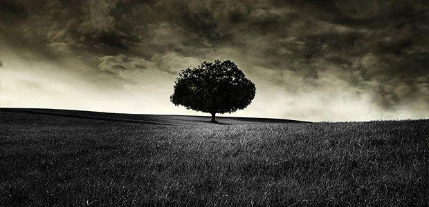 «Το δέντρο στην πεζογραφία και στο θέατρο» της Σταυρούλας Γ. Τσούπρου