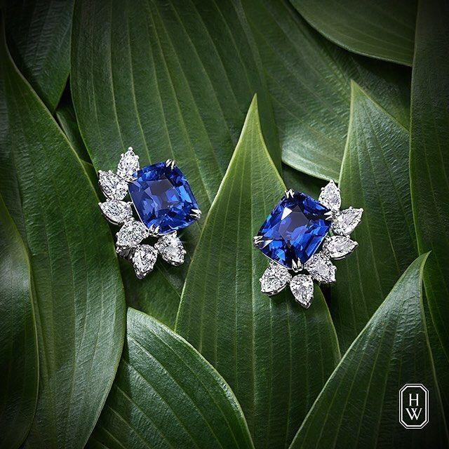 Like stars in a night sky, brilliant #diamonds illuminate deep blue sapphire earrings. #HarryWinston #HighJewelry