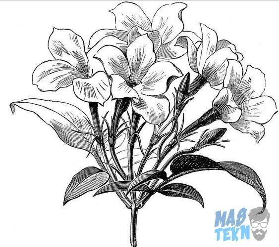 Pin Di Lukisan Bunga