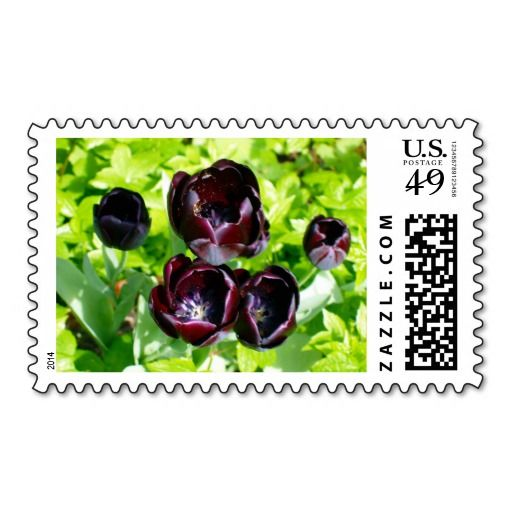 Black Tulips from Holland Postage Stamp