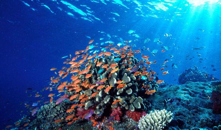 Wisata Bunakenadalah sebuah tempat wisata di Manado paling terpopuler. Jumlah kunjungan wisata ke Bunaken Manado ini memperlihatkan tren yang meningkat..