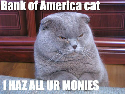 I hate Bank of America cat. #bankvsamerica #makeboapay #99power #classwarkittehFunny Image, Banker Cat, Animal Humor, Funny Pictures, Funny Cat, Scottish Folding, Fat Cat, Funny Animal, Kitty