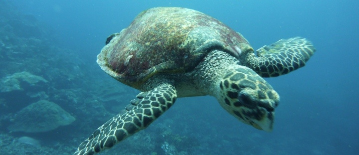 Marine Conservation in Fiji