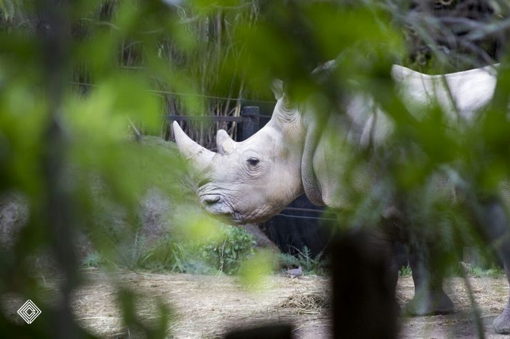 Cleytdesign - rinoceronte