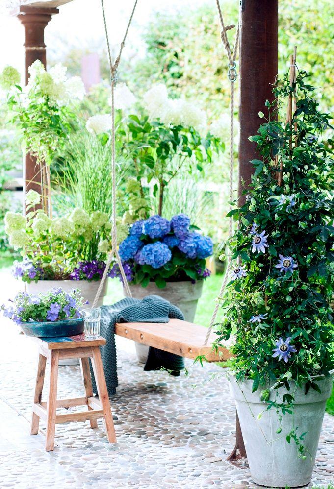 Wist je dat de passiebloem ook in een bloempot kan? Meer tuin - en wooninspiratie op http://www.interieurinspiratie.nl/