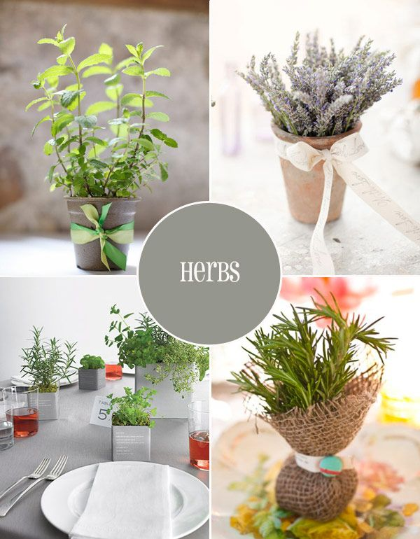 love the idea of herbs and/or succulents as favors for guests. that's right up my alley and works perfect for an outdoor, garden-based wedding. Herb-Favours