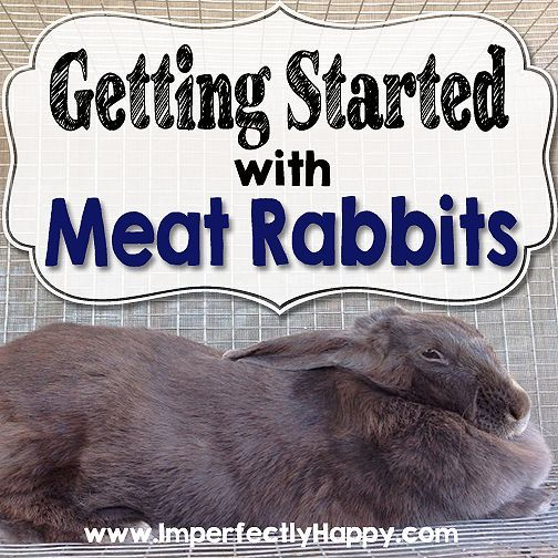 Getting Started with Meat Rabbits | by ImperfectlyHappy.com