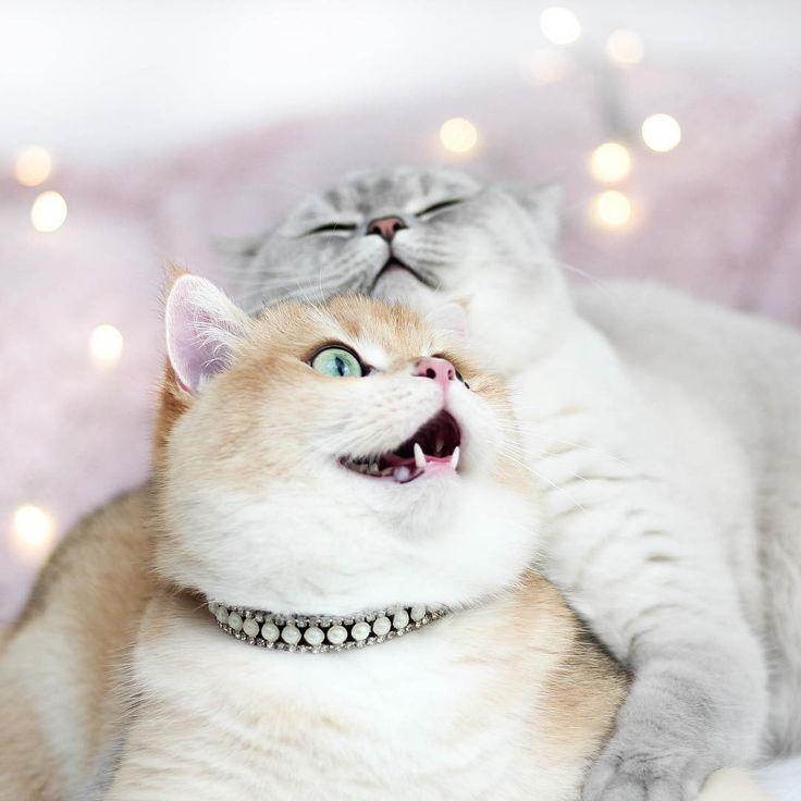 Доброе утро счастье мое картинки для мужчины с кошками, дед мороз картинки