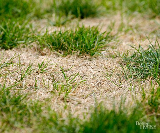 roundup for lawns instructions
