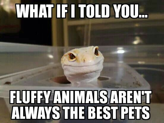 I have fluffy animals now, but I'd love to have one of these cute lil scaly guys one day :)