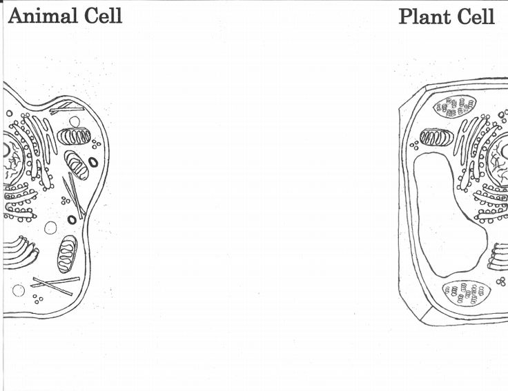 Plant and Animal Cell Foldable Template.pdf | Classroom ...