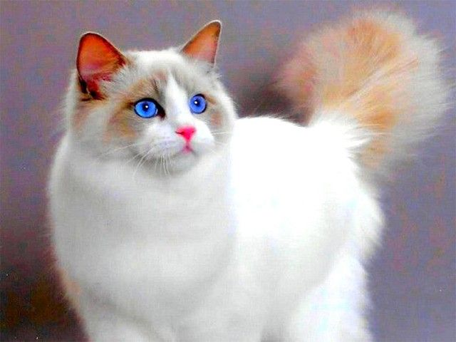 ПОВЕРЬЯ О КОШКАХ  - Если кошка сама приходит в дом, это значит, что она приносит счастье и отводит беду; - Мужчина, любящий кошек, будет всегда любить свою жену; - Кошка моется - гостей намывает (зазывает); - Если кошка на человека тянется - обнову или выгоду сулит; - Кошка считается хранительницей достатка; -Когда кот чихает, ему надо говорить: «Будь здоров!», тогда зубы болеть не будут; - Если кот чихнет утром рядом с невестой накануне свадьбы, замужество ее будет удачным; - Только что…
