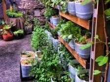 Great upcycled plastic bottle planters and pallet shelves at Dov Cafe, Sydney (via The Good Hood)